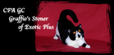 CFA CH Graffio's Stoner of Exotic Plus - Exotic Black and White